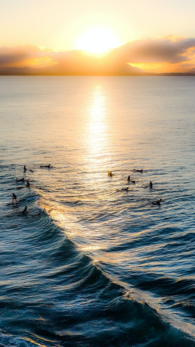 white and black birds on sea during sunset